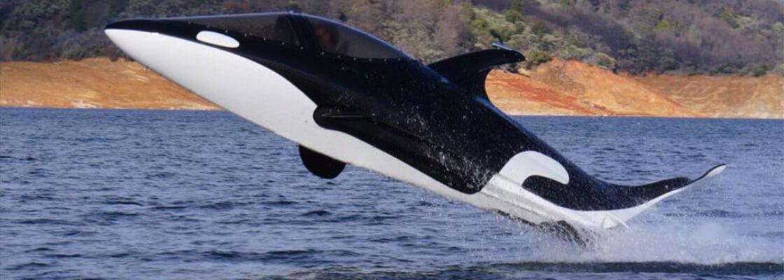 sea breacher